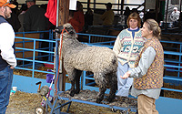 NY Sheep & Wool Festival